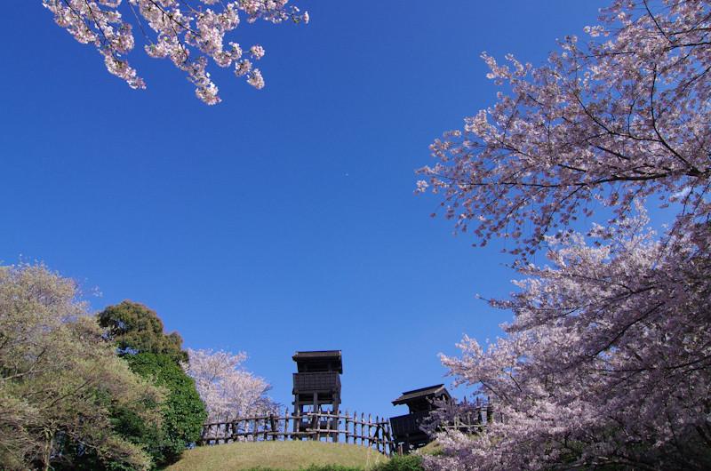 Sakura20170412ah