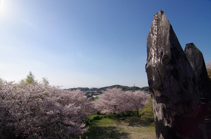 Sakura20170412am2