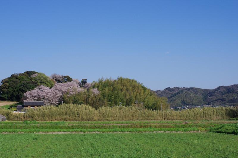 Sakura20170412aq